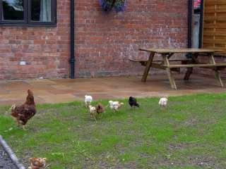 Betty's Barn photo 1