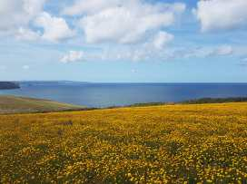 Just Beachy - Cornwall - 1000429 - thumbnail photo 22