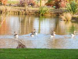Wagtail Lodge - Lincolnshire - 1000456 - thumbnail photo 18