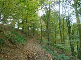 Greenham Cottage - Somerset & Wiltshire - 1000796 - thumbnail photo 22