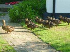 Garden Cottage - Norfolk - 17088 - thumbnail photo 8
