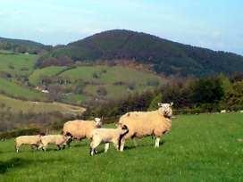 Swallow Cottage - Shropshire - 2074 - thumbnail photo 12