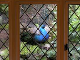 Conifers Cottage - North Wales - 380 - thumbnail photo 13