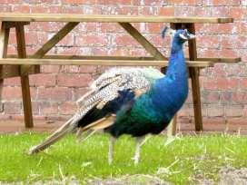 Kite's Nest - Shropshire - 4137 - thumbnail photo 9