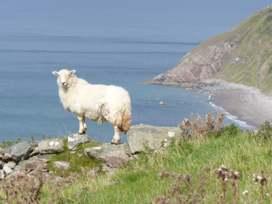 Cae Garw Barn - North Wales - 8017 - thumbnail photo 23