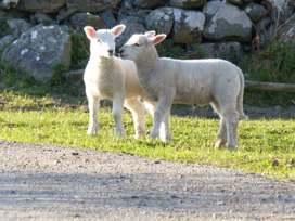 Cae Garw Barn - North Wales - 8017 - thumbnail photo 24
