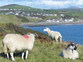 Cae Garw Barn - North Wales - 8017 - thumbnail photo 29