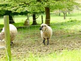 Cwmtwrch Cottage - South Wales - 917257 - thumbnail photo 19