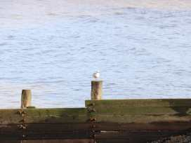 Robin's Nest - Norfolk - 917575 - thumbnail photo 37