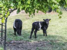 Tewets - Lake District - 918617 - thumbnail photo 32