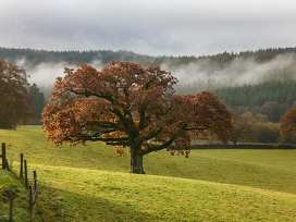 Little Esthwaite Cottage - Lake District - 920056 - thumbnail photo 13