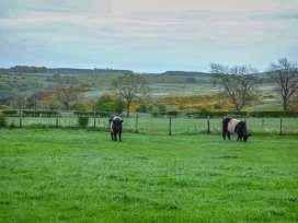 Fern Cottage - Northumberland - 920251 - thumbnail photo 11
