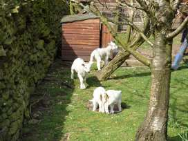 Moorside Cottage - Yorkshire Dales - 920588 - thumbnail photo 11
