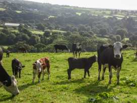 Bulls Cottage - Cornwall - 924874 - thumbnail photo 21