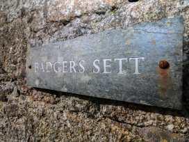 Badgers Sett - Cornwall - 936829 - thumbnail photo 3