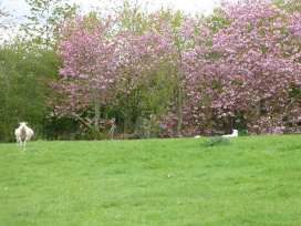 Coed Y Gaer - Shropshire - 941208 - thumbnail photo 27