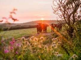 Stables Barn - Cornwall - 942616 - thumbnail photo 6