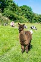 Stables Barn - Cornwall - 942616 - thumbnail photo 7