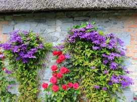 Seancaro Cottage - North Ireland - 954435 - thumbnail photo 16