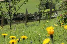 Ivy Cottage - Mid Wales - 954513 - thumbnail photo 35