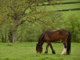 The Shire Hut - North Wales - 955259 - thumbnail photo 15
