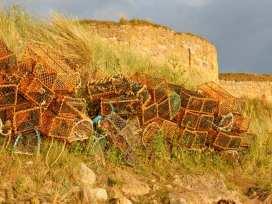 Sandy Cove - Northumberland - 958540 - thumbnail photo 5