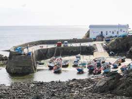 Gannet Watch - Cornwall - 959733 - thumbnail photo 21