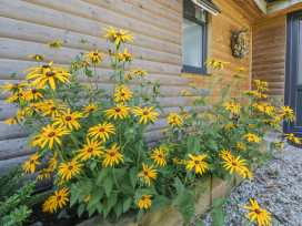 Sunflower Lodge - Cornwall - 960359 - thumbnail photo 18