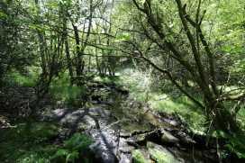 Maes Madog - North Wales - 961172 - thumbnail photo 25