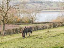 The Ivy Barn - Peak District - 967167 - thumbnail photo 11