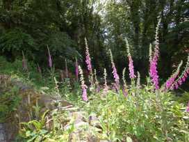 Foxgloves - Devon - 967307 - thumbnail photo 9