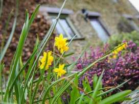 Rowan Cottage - Cornwall - 969120 - thumbnail photo 9