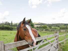 Ramblers - Mid Wales - 969922 - thumbnail photo 36