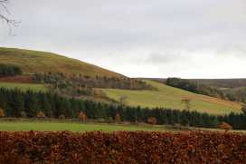 The Grieves Cottage - Scottish Lowlands - 971573 - thumbnail photo 27