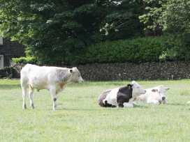 Tanner Croft Cottage - Lake District - 972385 - thumbnail photo 27