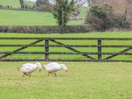 The Barn - East Ireland - 972411 - thumbnail photo 32