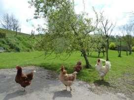 Tithe Cottage - Lake District - 972481 - thumbnail photo 17