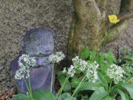 Mrs Tiggywinkles - Lake District - 972586 - thumbnail photo 16