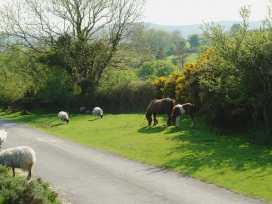 Waysideford Barn - Devon - 975816 - thumbnail photo 19