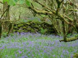 Hay Tor Cottage - Devon - 975822 - thumbnail photo 17