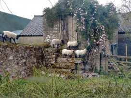 Lopes Cottage - Devon - 975842 - thumbnail photo 17