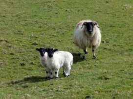 Pigwigs Place - Devon - 975852 - thumbnail photo 14