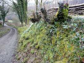 Nethercote Byre - Devon - 975976 - thumbnail photo 10