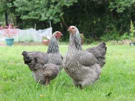 Boycombe Barn - Devon - 976029 - thumbnail photo 14