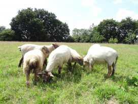 The Milk Shed - Devon - 976038 - thumbnail photo 16