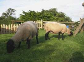 Yellowland Farm - Devon - 976284 - thumbnail photo 32