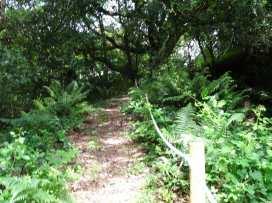 Swift Cottage - Cornwall - 976530 - thumbnail photo 20