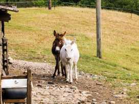 Speight Cottage - Lake District - 981731 - thumbnail photo 23