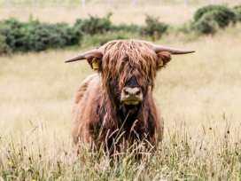 Kirsty's Retreat - Scottish Highlands - 984963 - thumbnail photo 13