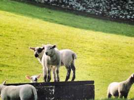 Hazelnut Barn - Cotswolds - 988714 - thumbnail photo 26